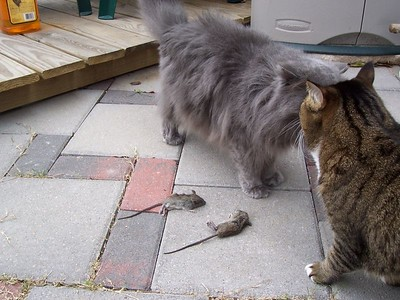 Einstein comes to inspect what Vespa caught.