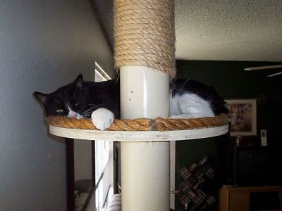 Hank naps on the top level of the cat tree Chris built.