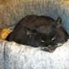 Squeek Half Asleep - Dec. 19, 2013 (17-1/2 Years Old)