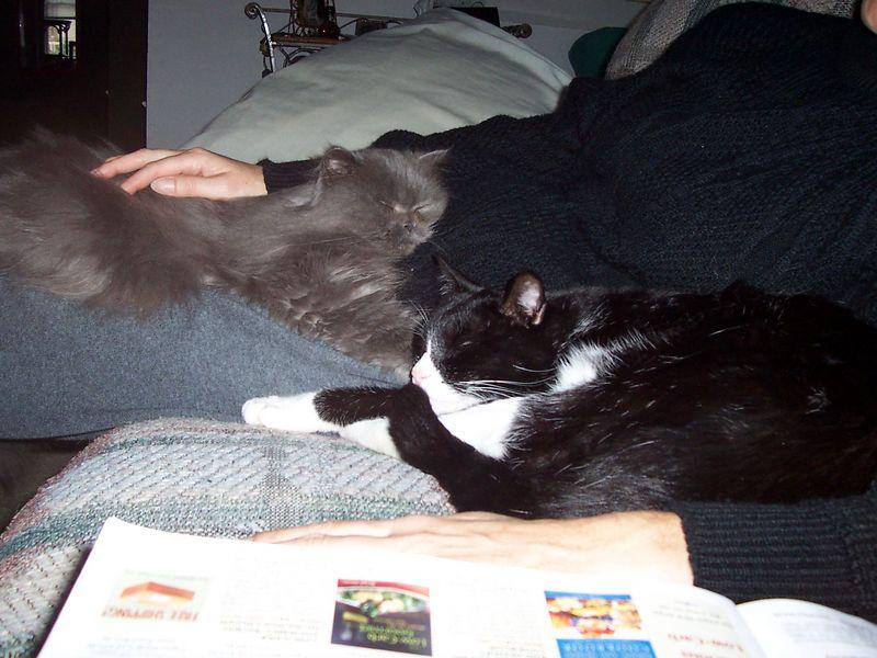 The boys nap on Caroline's lap.