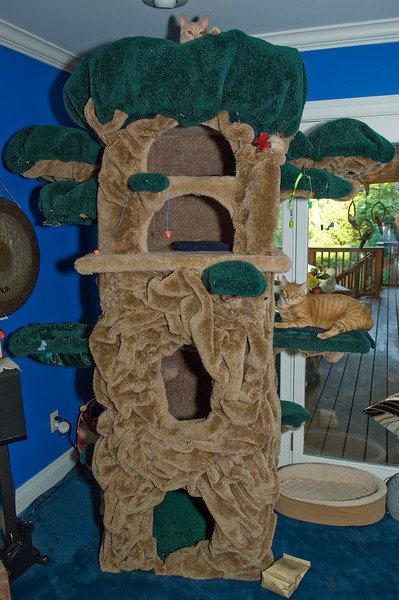 "Jimbo peers from the top of the Mansion, while Rusty lounges on a heated branch of their Cat Mansion  <a href=""http://www.sittingprettykitty.com/"">http://www.sittingprettykitty.com/</a>)"