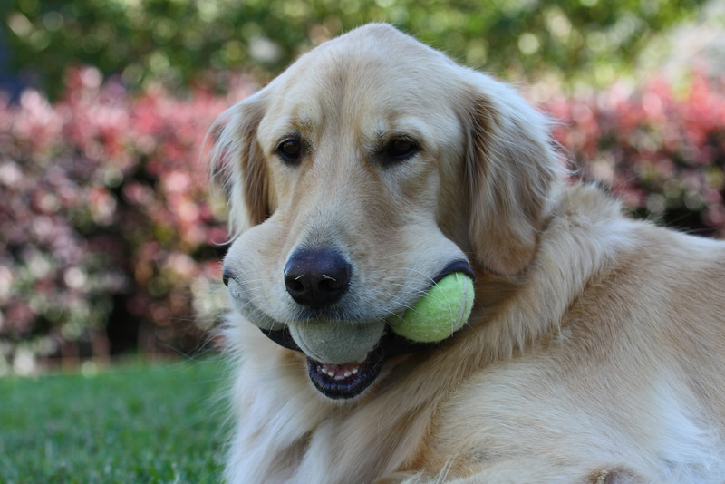 Jack's special talent with tennis balls.