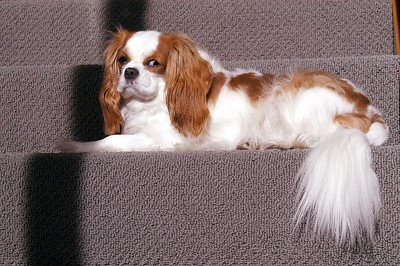 Cavalier on the stairs