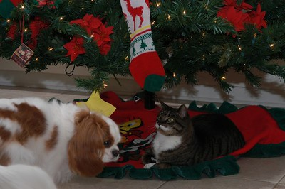 Copper and Abby under the Christmas Tree
