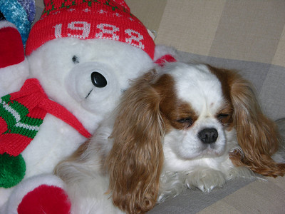 Copper sleeping with Christmas Bear