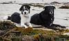 Seaweed Dogs_DSC2742