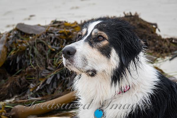 Seaweed Sally_DSC2744