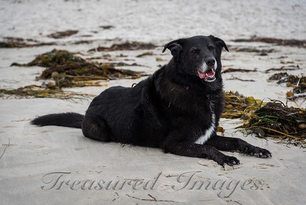 Seaweed Annie_DSC2721