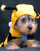 Teddy is busy as a bee