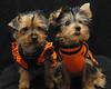 Sasha & Teddy all ready for halloween