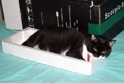 any box is a good box