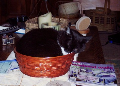 Olive in her favorite basket