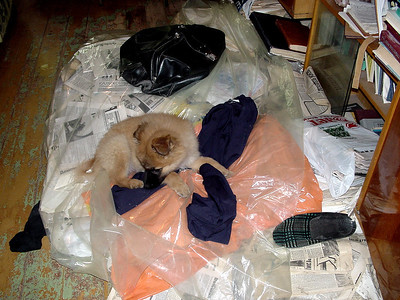 My owner' clothes are here... Where he is?