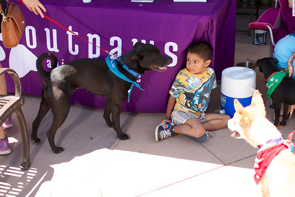 OutPaws June Adoption Event at Krisers 31