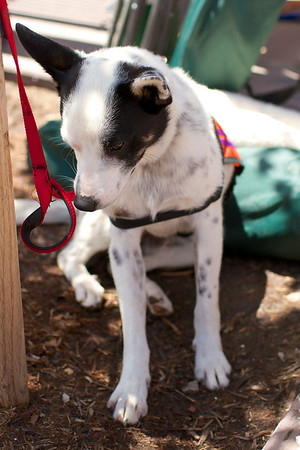 OutPaws June Adoption Event at Krisers 52