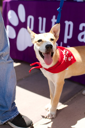OutPaws June Adoption Event at Krisers 48
