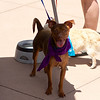 OutPaws June Adoption Event at Krisers 5