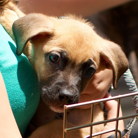OutPaws June Adoption Event at Krisers 30