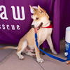 OutPaws June Adoption Event at Krisers 44