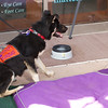 OutPaws June Adoption Event at Krisers 2
