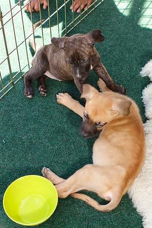 OutPaws June Adoption Event at Krisers 21