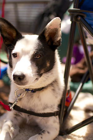 OutPaws June Adoption Event at Krisers 33