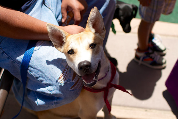 OutPaws June Adoption Event at Krisers 51