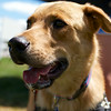 Redstone Adoption Event 33