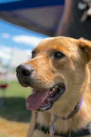 Redstone Adoption Event 32