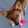 Redstone Adoption Event 37