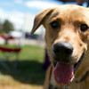 Redstone Adoption Event 31