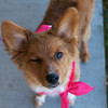 Redstone Adoption Event 39