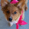 Redstone Adoption Event 36