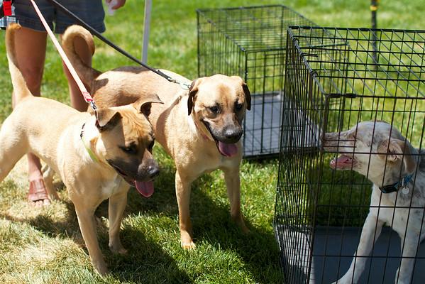 Redstone Adoption Event 5
