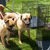 Redstone Adoption Event 5
