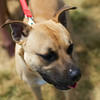 Redstone Adoption Event 7