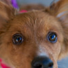Redstone Adoption Event 35