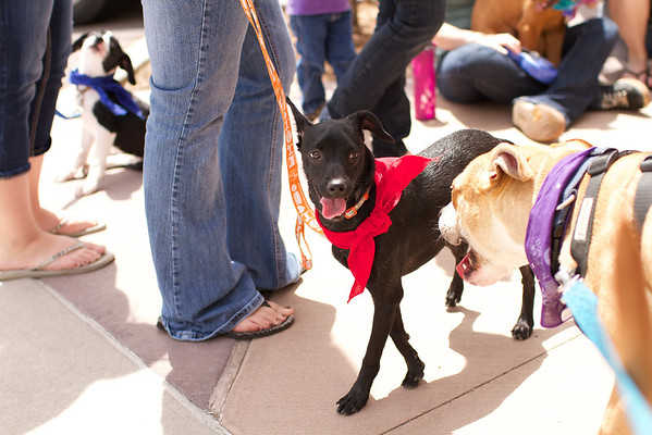 OutPaws May Adoption Event 8