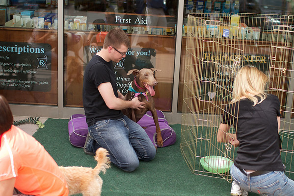 OutPaws May Adoption Event 79