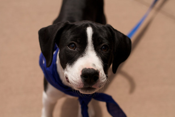 OutPaws May Adoption Event 11