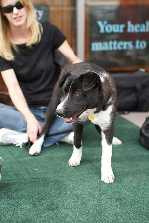 OutPaws May Adoption Event 141