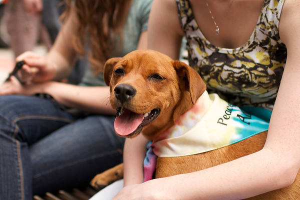 OutPaws May Adoption Event 75
