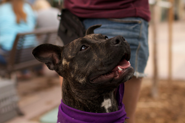 OutPaws May Adoption Event 60