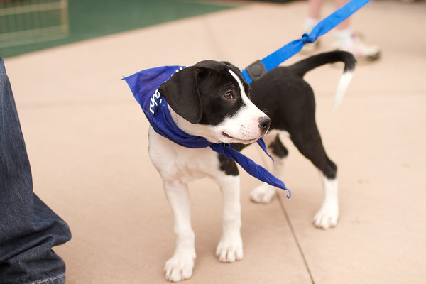 OutPaws May Adoption Event 54