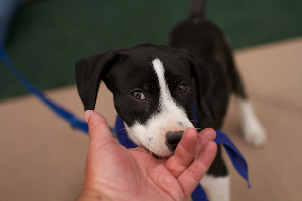 OutPaws May Adoption Event 153