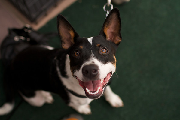 OutPaws May Adoption Event 91