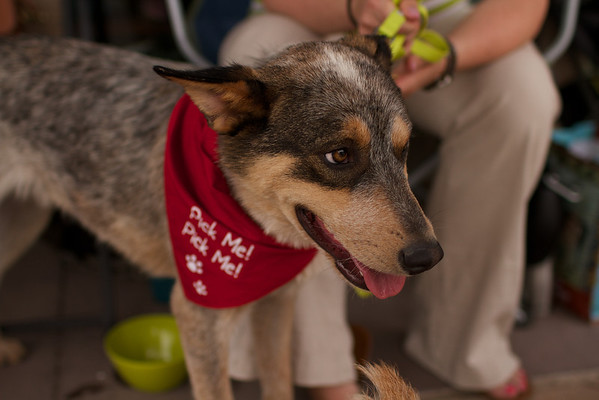 OutPaws May Adoption Event 85