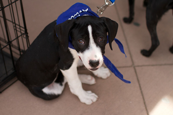 OutPaws May Adoption Event 89
