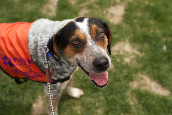 OutPaws May Adoption Event 123
