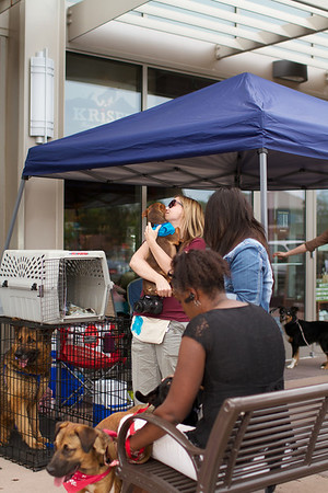 OutPaws May Adoption Event 198